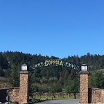 Francis Ford Coppola Winery Foto