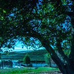 Pine Hill Lodge Photo
