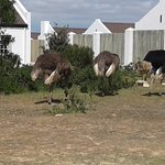 Photo de De Hoop Nature Reserve