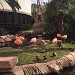 Flamingos at The Flamingo