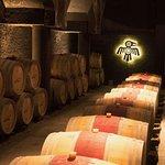 Kaiken wine cellar