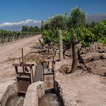 Irrigating from the Andes