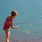 Kinbasket Lake Resort Photo