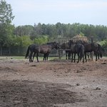 Some of the horses outside