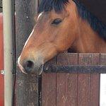 Lovely stabled horse.