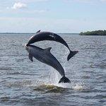 Wild Dolphin Show