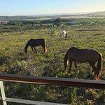 Photo de Farm 215 Nature Retreat & Fynbos Reserve