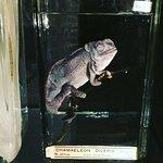 Foto de The Manchester Museum