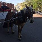 Madison tour company carriage rides