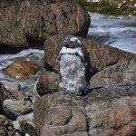 Photo of Stony Point Penguin Colony