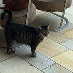 Kiki, the hotel cat