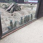 Photo de Twycross Zoo