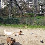 Photo of Jardin d'Acclimatation