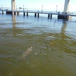 Saw not only dolphins, but manatees from the restaurant