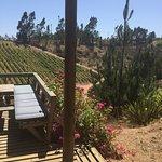 Photo of Vina Casa Marin Winery