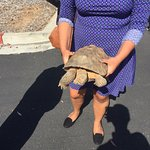 Staff demonstrating one of their rescued desert tortoise!