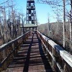 Grand Bay Wildlife Management Area Photo