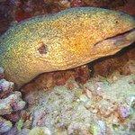 A huge eel.