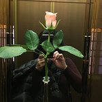 A fresh rose in the elevator every morning