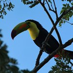 Toucan in a tree outside our room