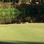 Oyster Bay Golf Links Photo