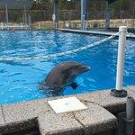 Foto de The Institute for Marine Mammal Studies