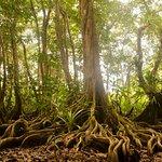 Bosque de Manglares por los Senderos del JBP