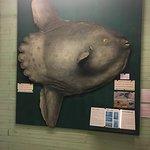 Foto de Museo del Mar