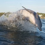 Dolphin jumping behind the boat
