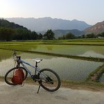 Riding our bike through the rice fields at sunset