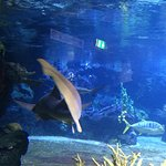 Aquarium Foto
