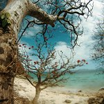 pretty tree at the back of the beach