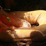 Johannesburg Zoo Photo
