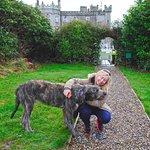 Beautiful Irish Wolfhound