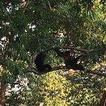 Photo of Flight of the Gibbon
