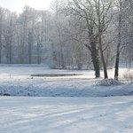 winter , frozen garden