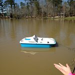 Yogi on the Lake Photo