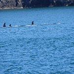 Foto de San Juan Island Whale & Wildlife Tours