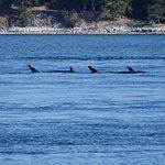 Photo of San Juan Island Whale & Wildlife Tours