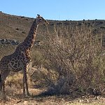 Sanbona Wildlife Reserve - Tilney Manor, Dwyka Tented Lodge, Gondwana Lodge Aufnahme