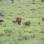 Photo of Pilanesberg National Park