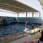 Sea lions and dolphins' show