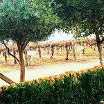 Photo of Ponte Winery