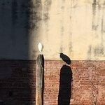 Bird in Castello.