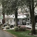 Snow Covered Pine Crest