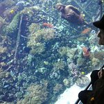 Spectaculair rif aquarium in Zoo van Antwerpen