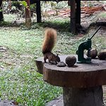 Squirrel feeding at lodge