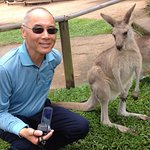 Baby kangaroo eyeing hubby's camcorder at Rainforestation enclosure