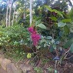 Photo de Princeville Botanical Gardens - Tours