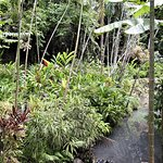 Lots of beautiful tropical plants